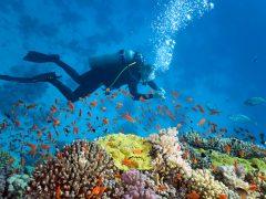 Trouver un club Sports aquatiques